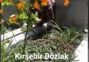 Kırşehir Bozlak - Yitirdim Anamı