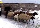 """Kış yaşadım yaza ayan... - Akçataş Köyü &quotHacıbektaş"""""""