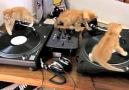 Kitten Beats Vol 1
