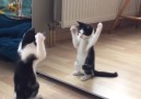 Kitten Sees Himself In The Mirror For The First Time And Can't...