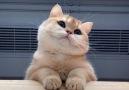- Kitten You&So Cute Facebook