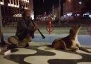 Klarnetin Sesiyle Efkarlanan Köpek.. Bomba Paylaşım