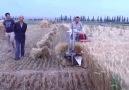 Kolay Kullanışlı Buğday Biçer Bağlar Makinası