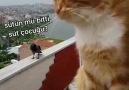 Komik Caps - Kedi ve karganın komik kavgası Facebook