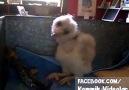 komik videolar - Müthiş Dans Yeteneği Olan Kuş D Facebook