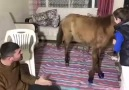 Komik Video - (Sefa Kindir) Komik videolar
