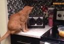Konuşan kediler 3 en komik kedi - Erhan Yurdagül Altun