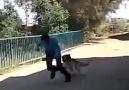Köpeği Korkutan Adam Kopmak Garanti )
