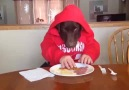 Köpeğin Kahvaltı Keyfi.. :))