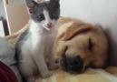 Köpeği yemeye çalışan koca canavar )))