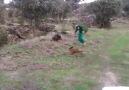 Köpek Domuzu , Domuz Adamı , Aşçı Bahçivanı :D :D :D