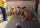 Köpeklerin Harika Yemek Eğitimi