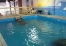 Köpeklerin havuz keyfi :)))