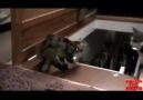 Köpeklerle kedilerin farkları :)