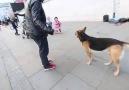 Köpekle Top Oynamak