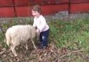 Koyunun bu kadar sevgi dolu ve neşeli olduğunu biliyor muydunuz