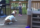 Küçük Çocukla Köpeğin Sevimli Oyunu