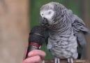 Kuş beyinli derken iyi düşünün