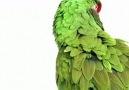 Kuş Çeşitleri..