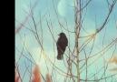 Kuşlar & çiçekler..