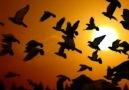 Kuşlar ╭♥╯╭♥╯