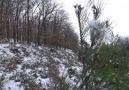 Lapseki TV - Lapsekiye kar yağdı. Facebook