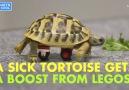 Lego Wheelchair for Tortoise
