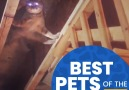 Let&take a look back at the Best Pets of February!