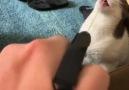 ListeList Hayvansever - Bazı kedilere su işlemez Facebook