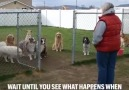ListeList Hayvansever - Disiplinli köpekler Facebook