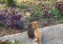 ListeList Hayvansever - Minik dostlar Facebook