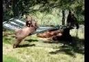 3 little bears and momma play on a hammock