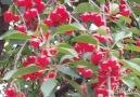 Little Beauty - Beautiful cherry fruit & flower! Facebook