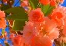 Little Beauty - Super gorgeous flower! Facebook