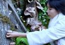 Liziqi Cooking - I planted shiitake mushrooms in the mountain Facebook