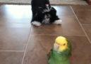 LOL Pets - Chatty Birds Facebook