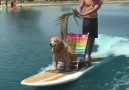 Look at this pup! Riding in style! )