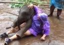Los elefantes son los alegres de la naturaleza!