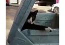 Mahallenin Delikanlı Abisi Tarzında Duran Kedi