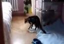 Marijuana Bağımlısı Kedi