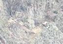 Maşallah O Hız Neyin İşareti - Avcının Yaban Hayatı