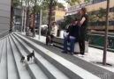 Masumca Tek Başına Oyun Oynayan Köpek )