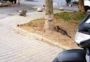 Matrix kedi ve taklacı kedi iş başında