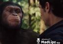 Maymunlar cehennemi kesilen sahneler