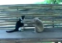 Maymunun Kediyle Güreşi :))