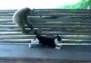 Maymun ve kedi oyunu