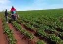 Mazota zam gelince çiftçinin çözümü