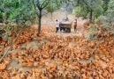Mega - Such a Wonderful Chicken Farm Facebook