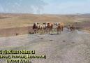 MEKTUP SELAM SÖYLE BENDEN SILAYA - Eski Türküler Piribeyli