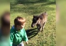 Miniature Pony Loves To Play With Boy